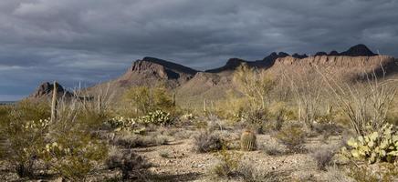 botte del parco nazionale del saguaro foto