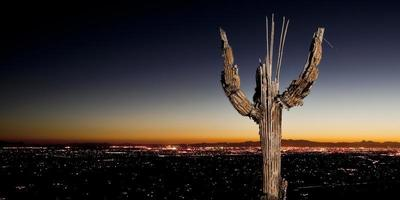 ossa di saguaro e luci della città Tucson foto