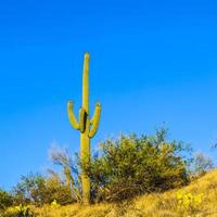 cactus verde nel deserto foto