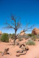 paesaggio americano del deserto