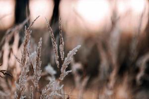 erba secca