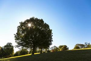 albero del parco piemontese
