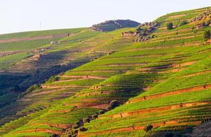 valle del fiume douro, portogallo foto