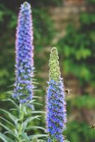 fiori estivi blu foto