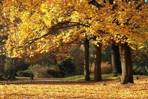 jesień foto