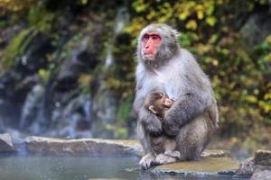 la scimmia è relax foto