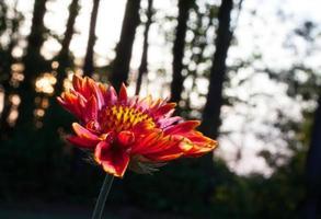 fioritura primaverile