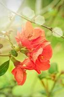 fiore di primavera foto