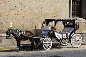 carrozza trainata da cavalli a guadalajara, jalisco, messico foto