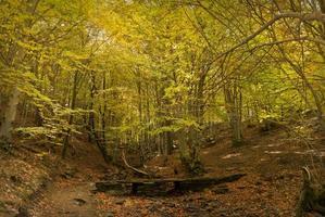foresta d'autunno. ottobre