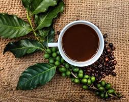 chicchi di caffè 48 foto