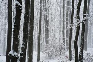 bellissimo paesaggio invernale foto