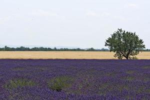 colorato paesaggio francese foto