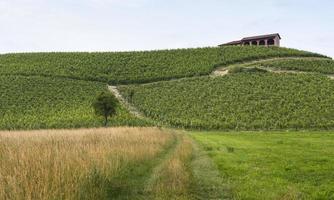 monferrato (piemonte): paesaggio