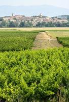 paesaggio vicino a carcassonne