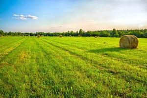 paesaggio rurale estivo