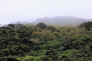 paesaggio di bush dell'isola foto