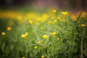 paesaggio estivo di fiori di prato foto