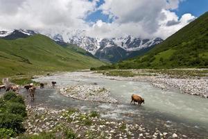 paesaggio montano con mucche.