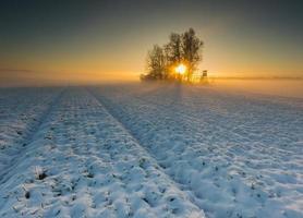 bellissimo paesaggio campo invernale. foto