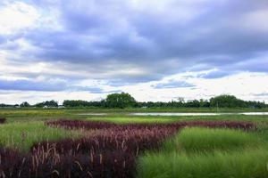 paesaggio dell'erba. foto