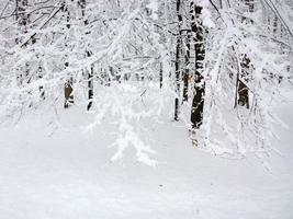 foresta invernale.