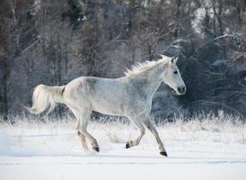 cavallo invernale foto