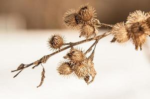 sbavature invernali foto