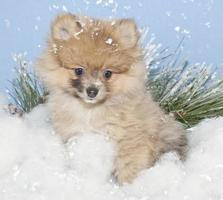 pom invernale foto