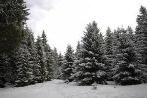 harz inverno foto