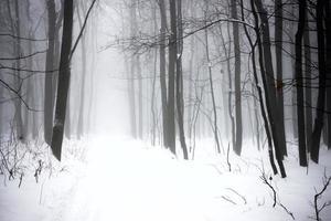 foresta nebbiosa invernale