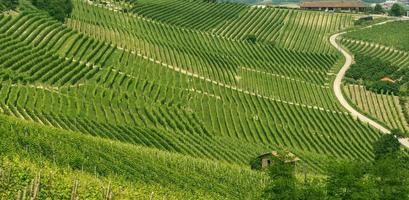 paesaggio a langhe (piemonte) foto