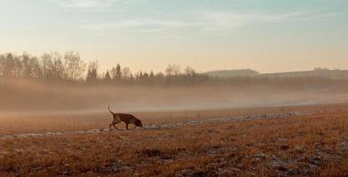 paesaggio autunnale con un cane da caccia. foto