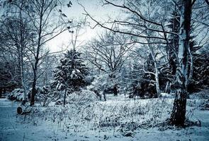 scena invernale foto