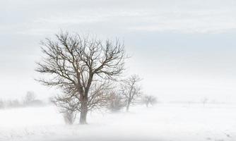 bufera di neve invernale foto