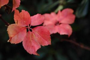 foglie in inverno foto