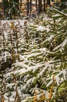 foresta durante l'inverno foto