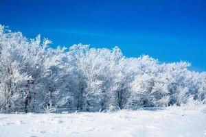 bellissima foresta invernale