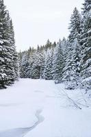 il torrente invernale