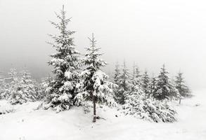 foresta nebbiosa in inverno foto