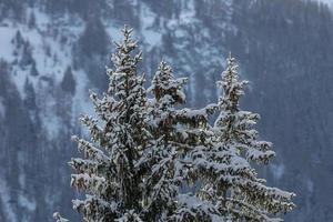inverno nelle alpi foto