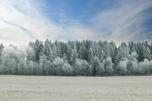 sfondo sfocato neve invernale foresta foto