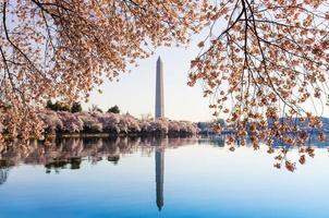 le torri del monumento di Washington sopra i fiori foto