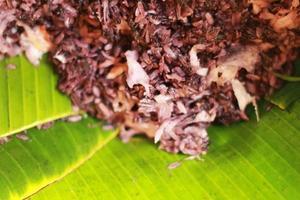 chicco di riso tagliuzzato - dessert della Tailandia.