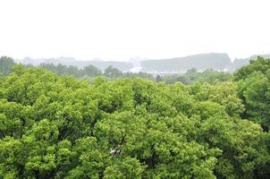 leaft verde foto