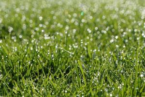 rugiada sull'erba in una giornata di sole