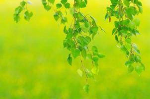 fogliame fresco di primavera