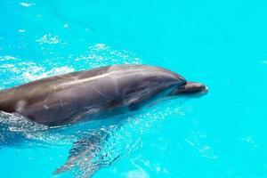 i delfini nuotano nel primo piano della piscina foto