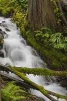 estratto della foresta pluviale