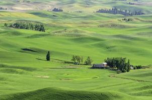 dolci colline nel nord-ovest pacifico